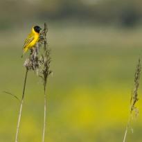A Yellow streak against the landscape