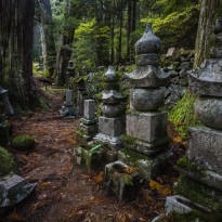 Tombs and Trees