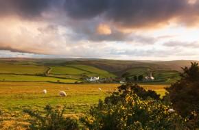 Exmoor pasture